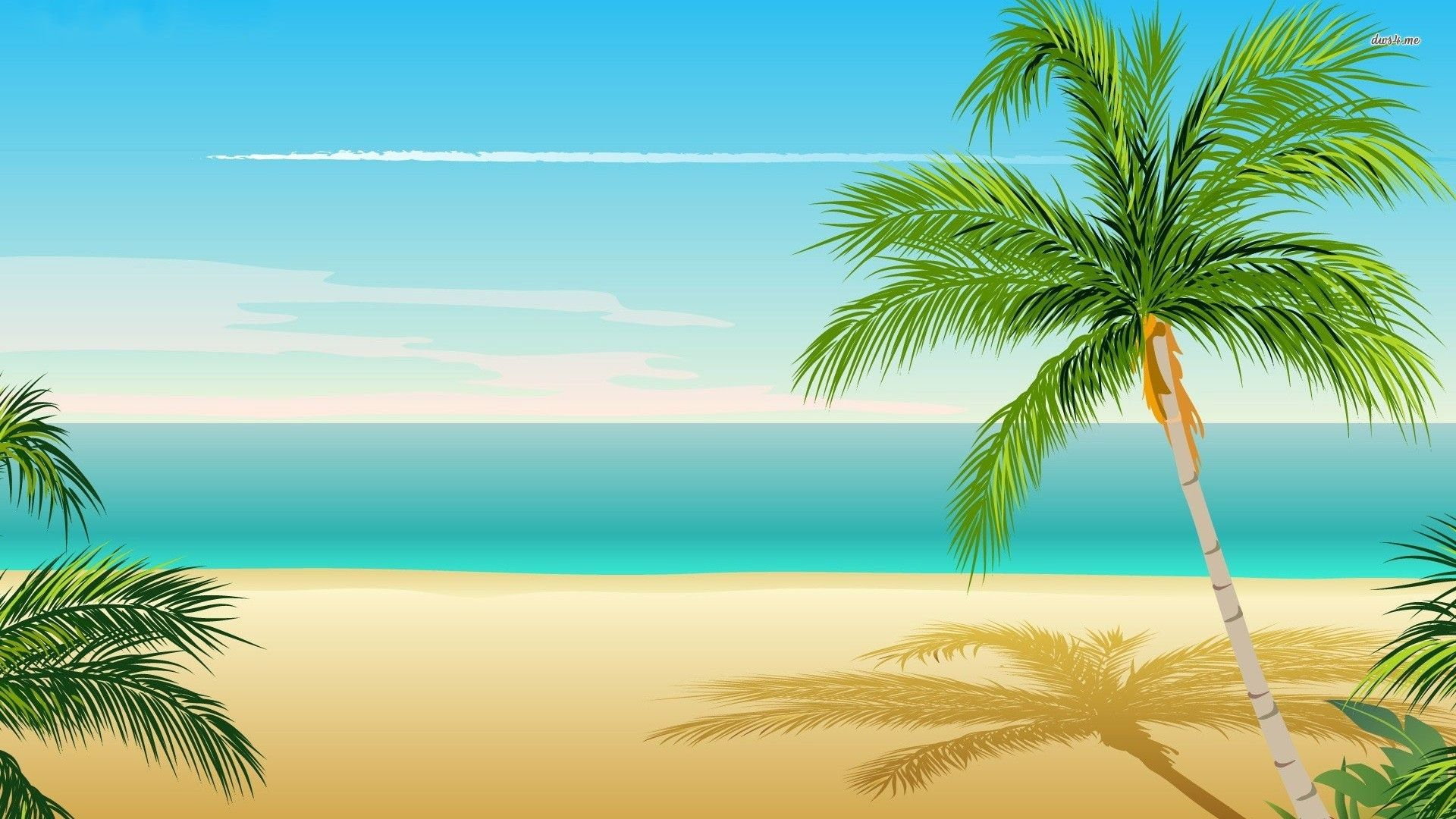 Palm Tree Top HD desktop wallpaper Widescreen High