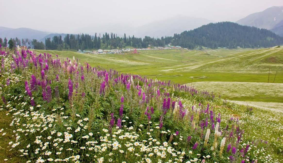 Image result for gulmarg in summer