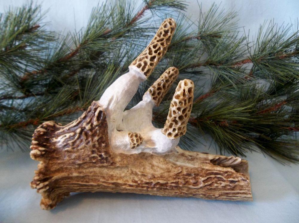 Many morel mushroom spores carved large antler woodland