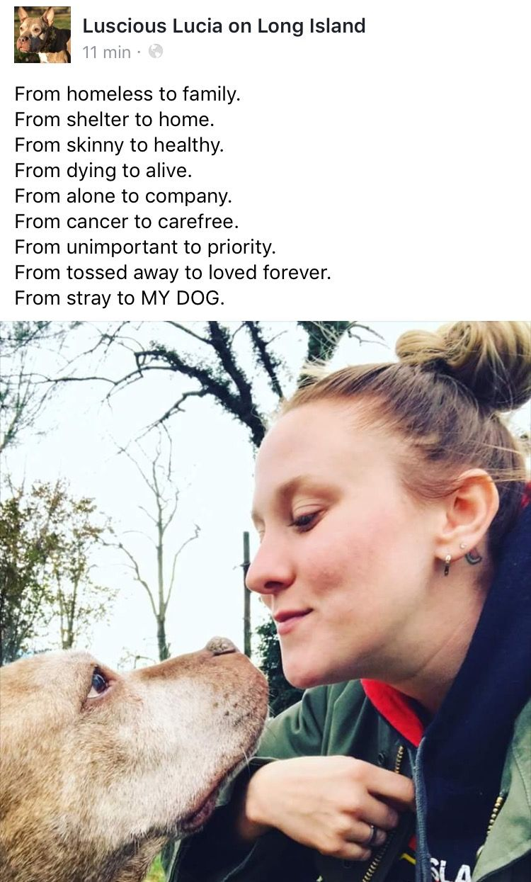 12/12/16 ❤️❤️❤️ GOLDIE (MELANIE) AND HER FOREVER MOM ARE DEEPLY IN LOVE ❤️❤️❤️❤️ /ij🐾🐾   https://m.facebook.com/story.php?story_fbid=859997557474394&substory_index=0&id=276003309207158&__tn__=%2As