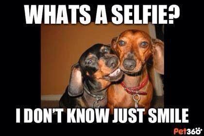 Selfie Funny Dachshund Dachshund Dog Dachshund