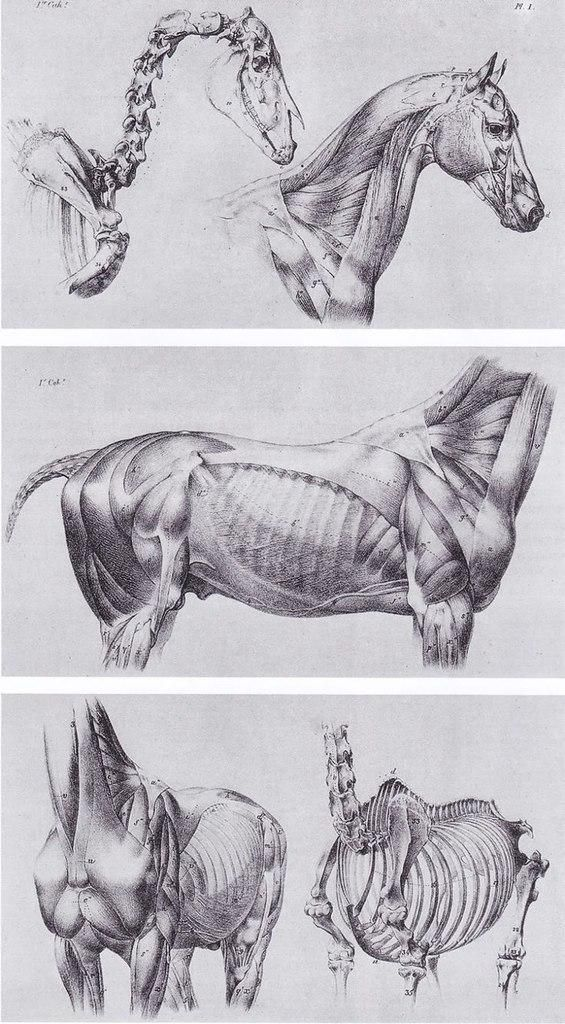 Мои закладки | Tutorials Drawing | Pinterest | Anatomy, Animal ...