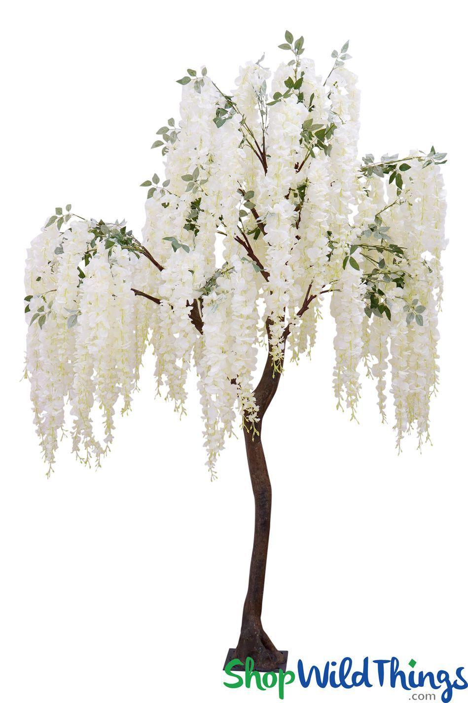 Snow Fountain Cream Flowering Weeping Cherry Tree 8 Feet Tall Weeping Cherry Tree Flowering Trees Cherry Tree
