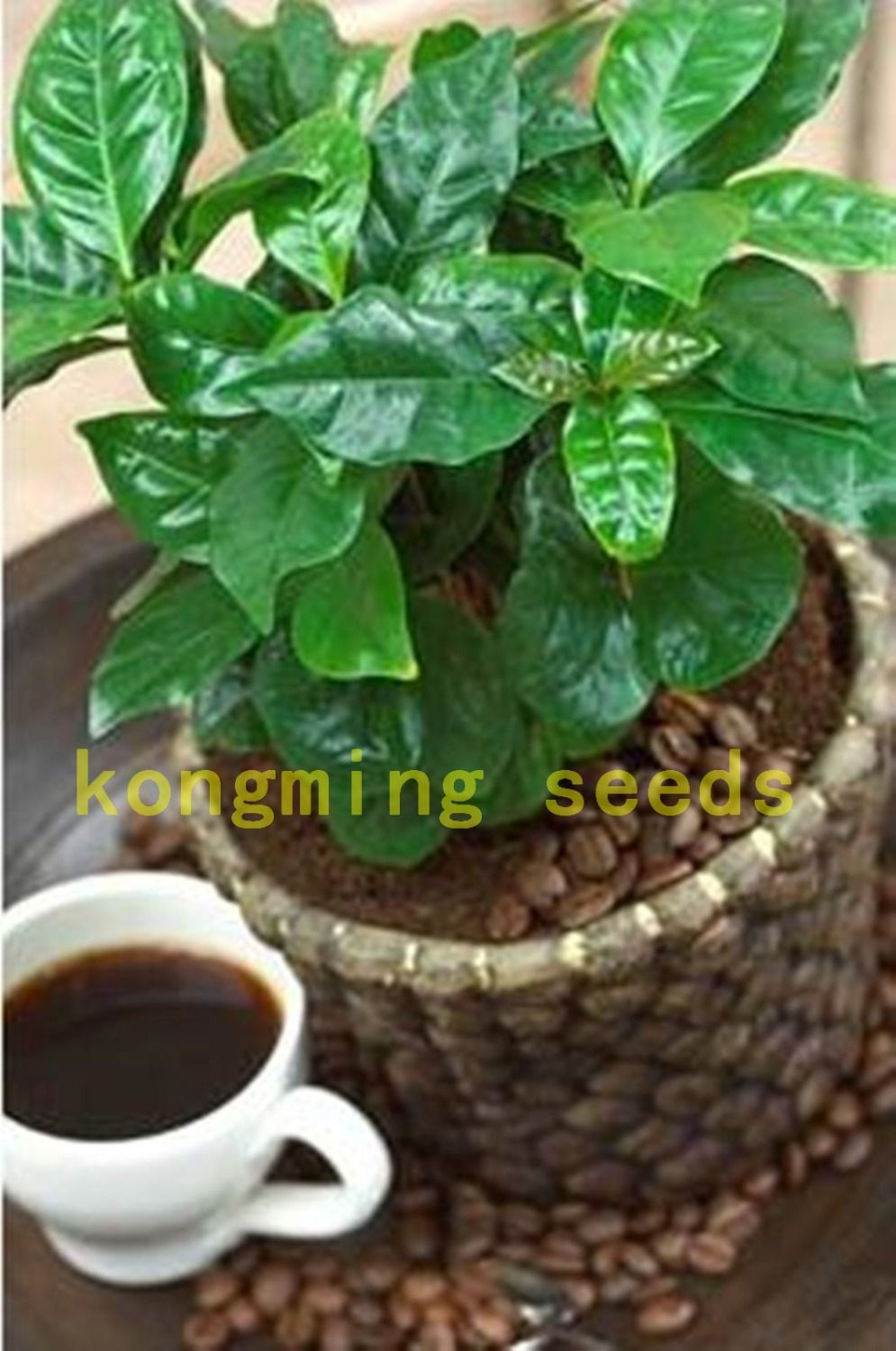 Coffea arabica цветы