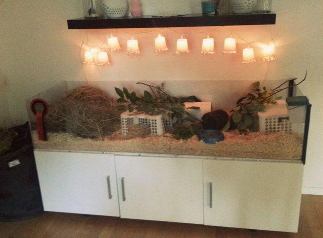 Nya buren! - Boende & inredning - Marsvin iFokus