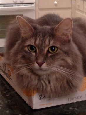 My Cat Lilly Jennifer Harrisburg Nc 12 8 13 Cute Puppies And Kittens Beautiful Cats Pictures Crazy Cats