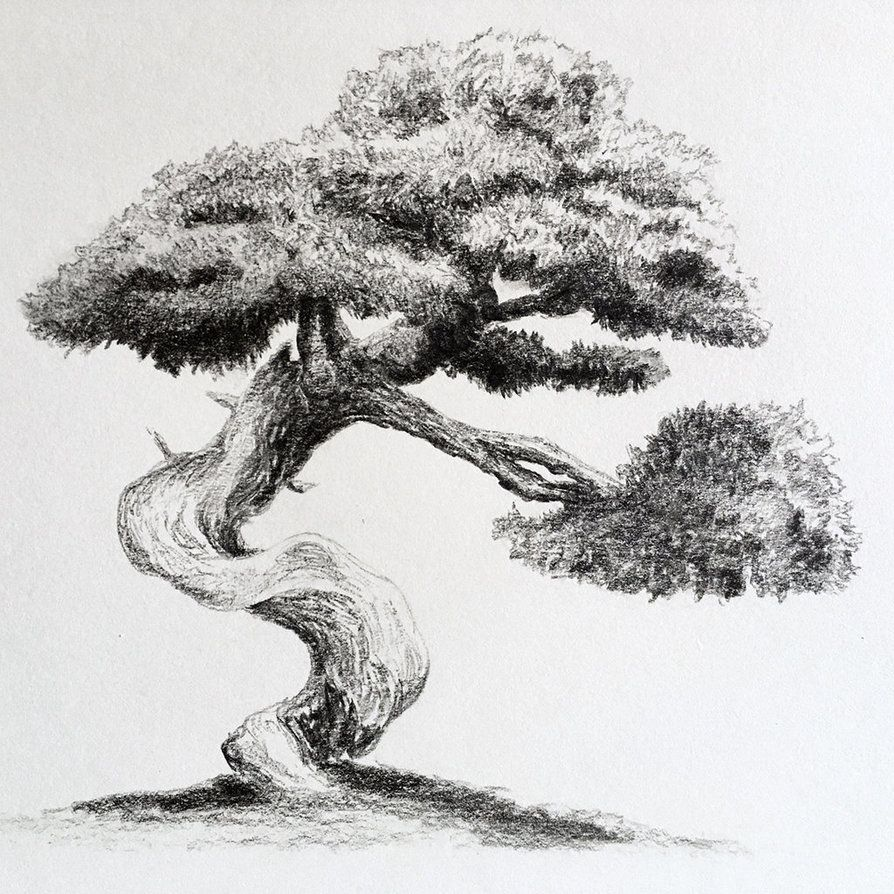 Bonsai By Ninjason57 Deviantart Com On Deviantart Bonsai Watercolor Trees Drawings