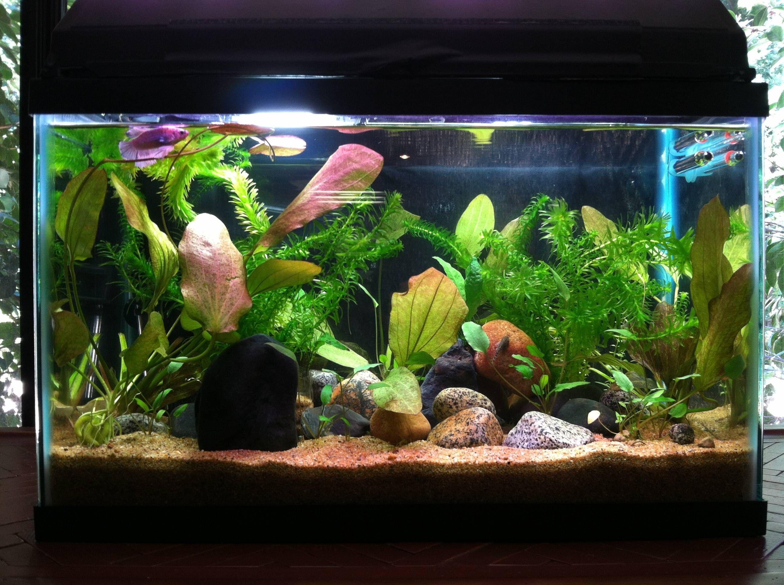 Very Beautiful Planted Tank 10 Gallon Fish Tank Fish Tank Betta Fish