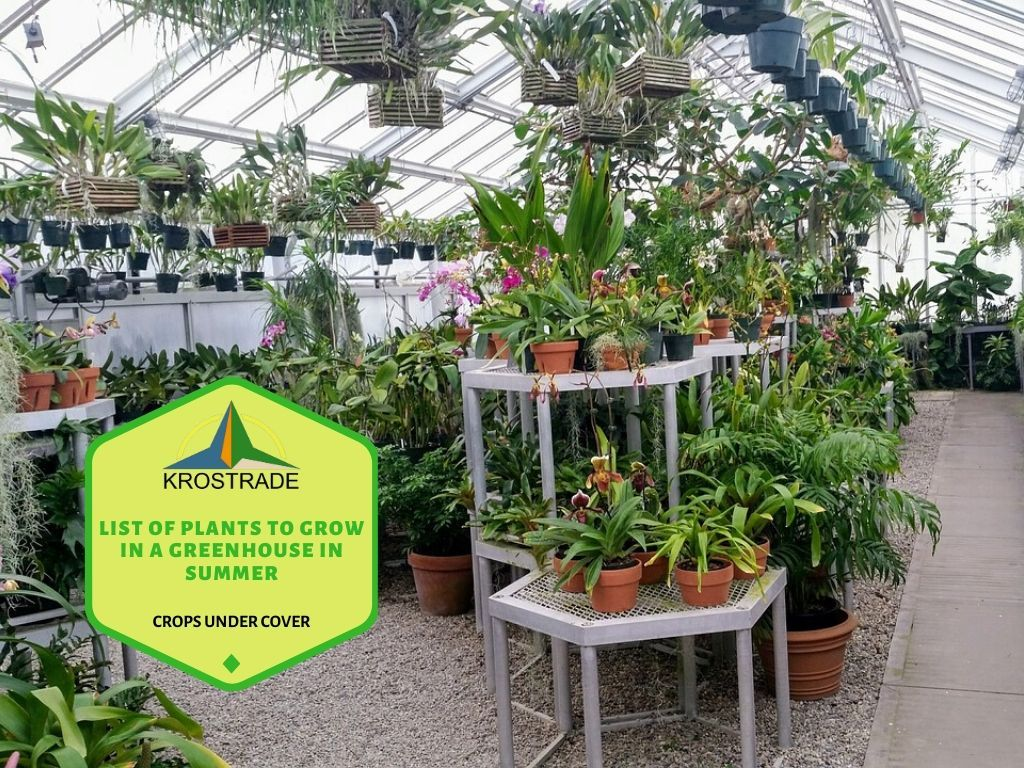 List Of Plants To Grow In A Greenhouse In Summer In 2020 Plants Greenhouse Growing Growing