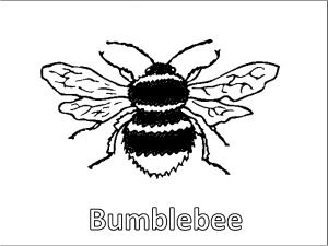 Bee Coloring Pages Educational Activity Sheets And Puzzles Free To Download
