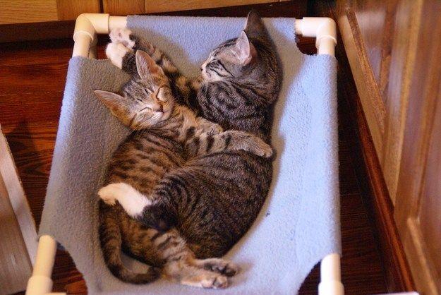 hug_cat11