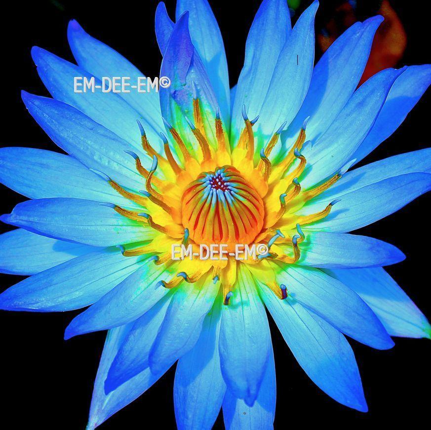 Australian Artist EM-DEE-EM Original Photograph ~ Digital Image ~ Magic 3027-5