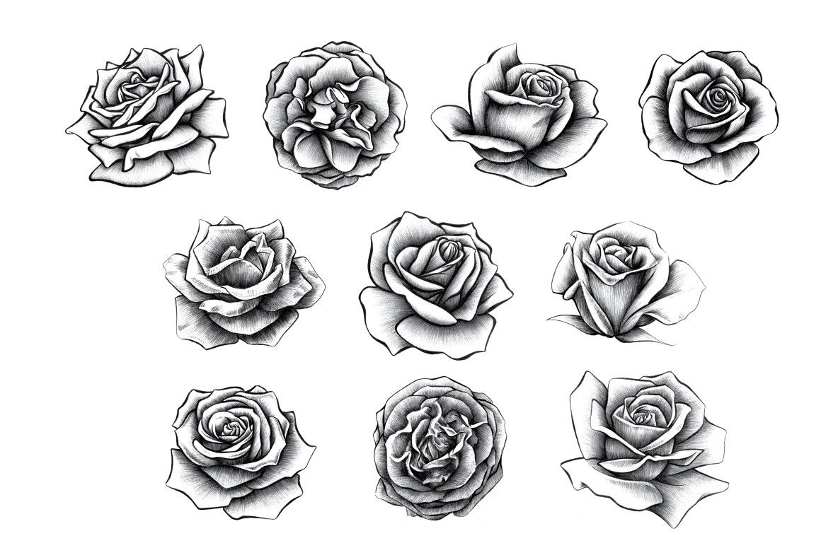 Hand Drawn Rose Collection Graphics Youworkforthem Roses Drawing Rose Tattoo Stencil Realistic Rose Tattoo
