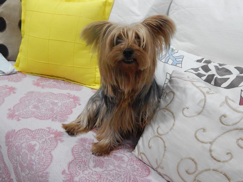 Gosta muito de ficar no sofá B-)