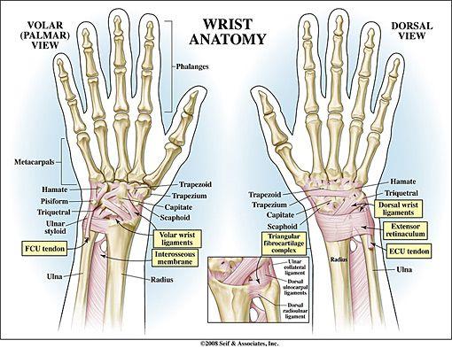 1000 images about wrist pain on pinterest comfortable pillows  : wrist pain diagram - findchart.co