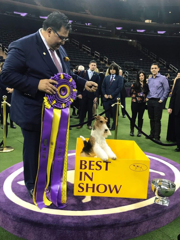 Pin By Krisztina Schultheisz On Dog Show