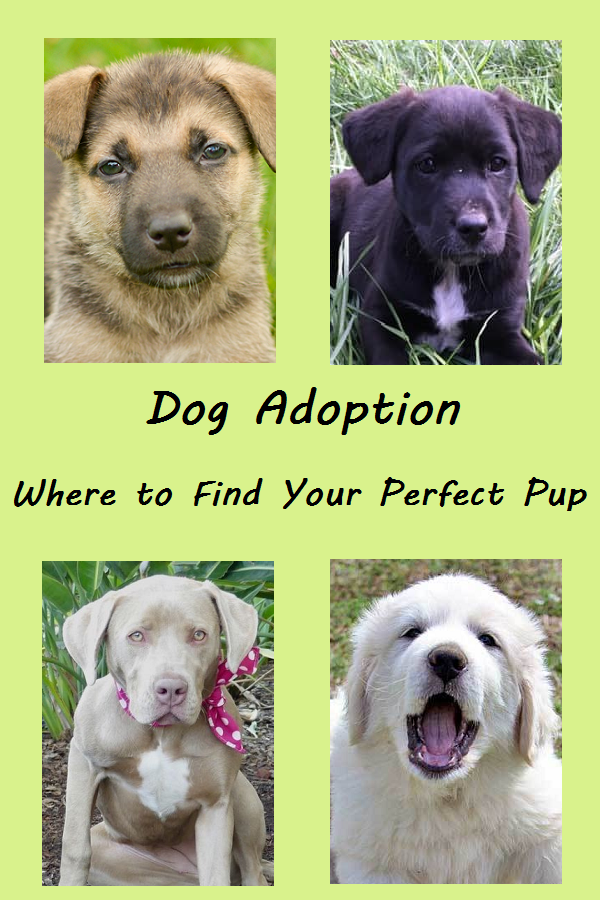Dog Adoption Finding Your Perfect Pup Dog Adoption Dog