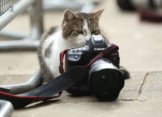 All About No10 Chief Mouser Larry The Cat Who Has A New Flatmate Boris Cats Battersea Dogs Cats And Kittens