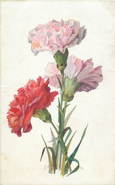Carnations Flower Studies Postcard Set 1923 Botanical Drawings