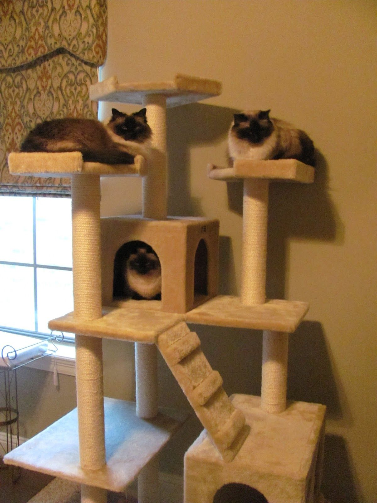 Cat accessories cat tree cat and cat hacks for Cat climber plans