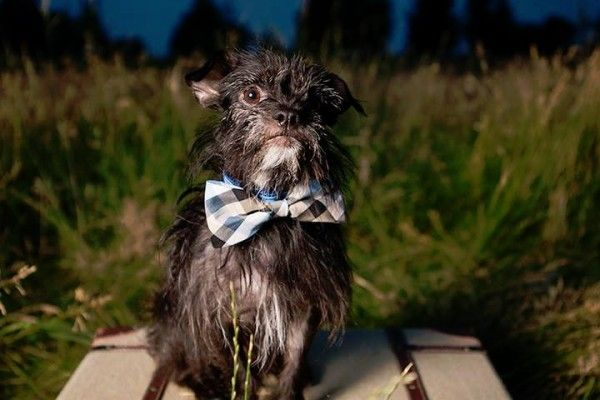 © Angel Sallade Photography, Adoptable- Yorkie-Chihuahua-mix-Wishbone-Canine-Rescue