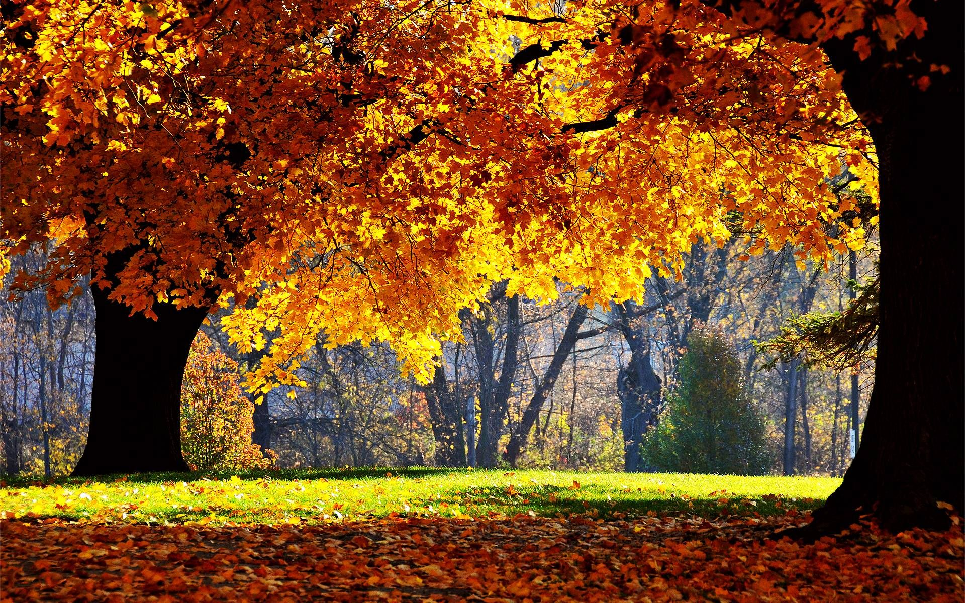 Free Fall Desktop Backgrounds Desktop Wallpaper Fall Autumn Landscape Fall Wallpaper