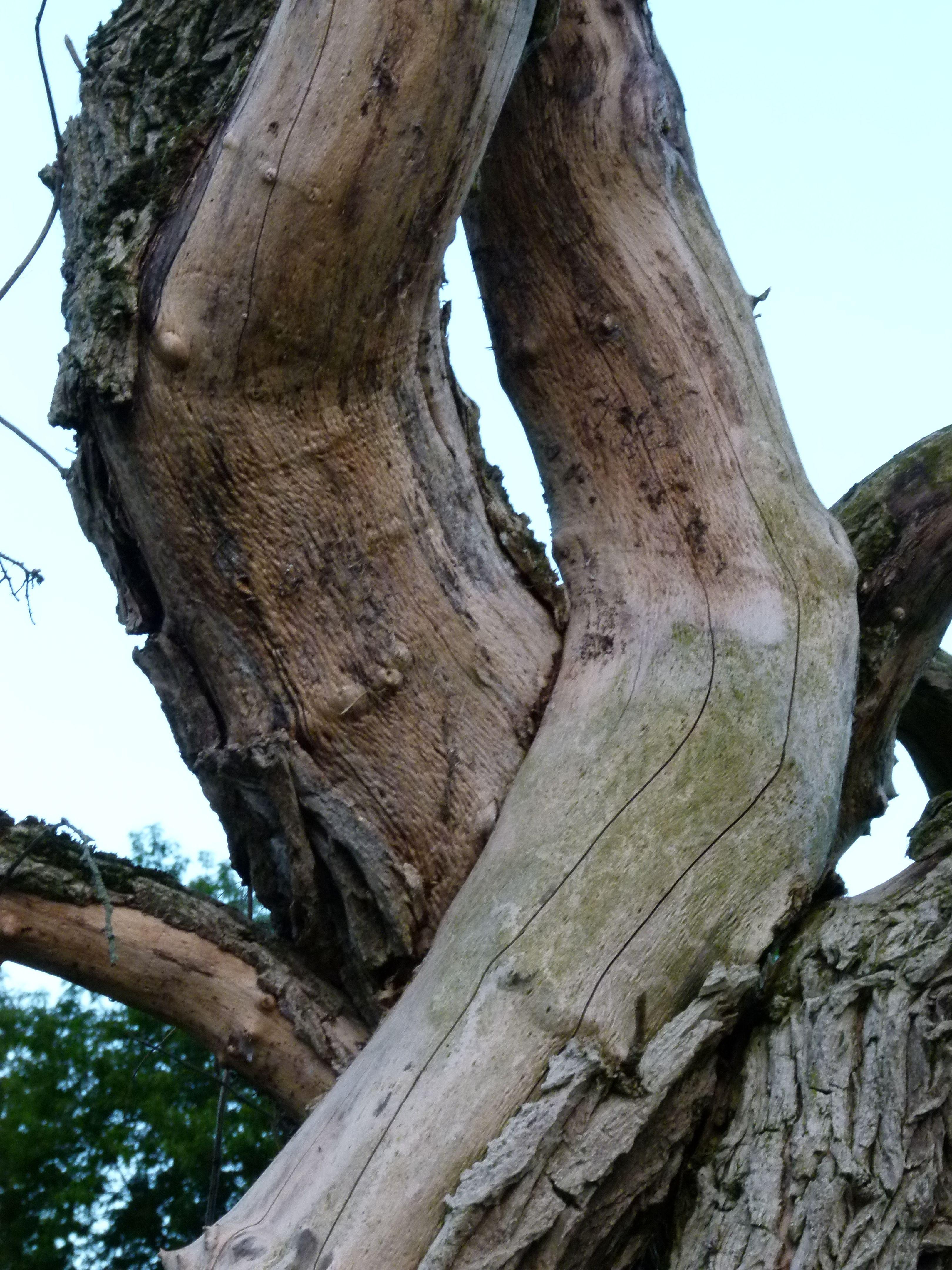 Do the twist Tree people, Tree hugger, Growing tree