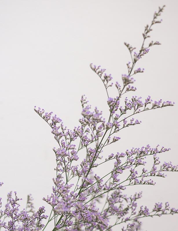 Caspia Wonderland Botanicals In 2020 Botanical Flowers Dry Well
