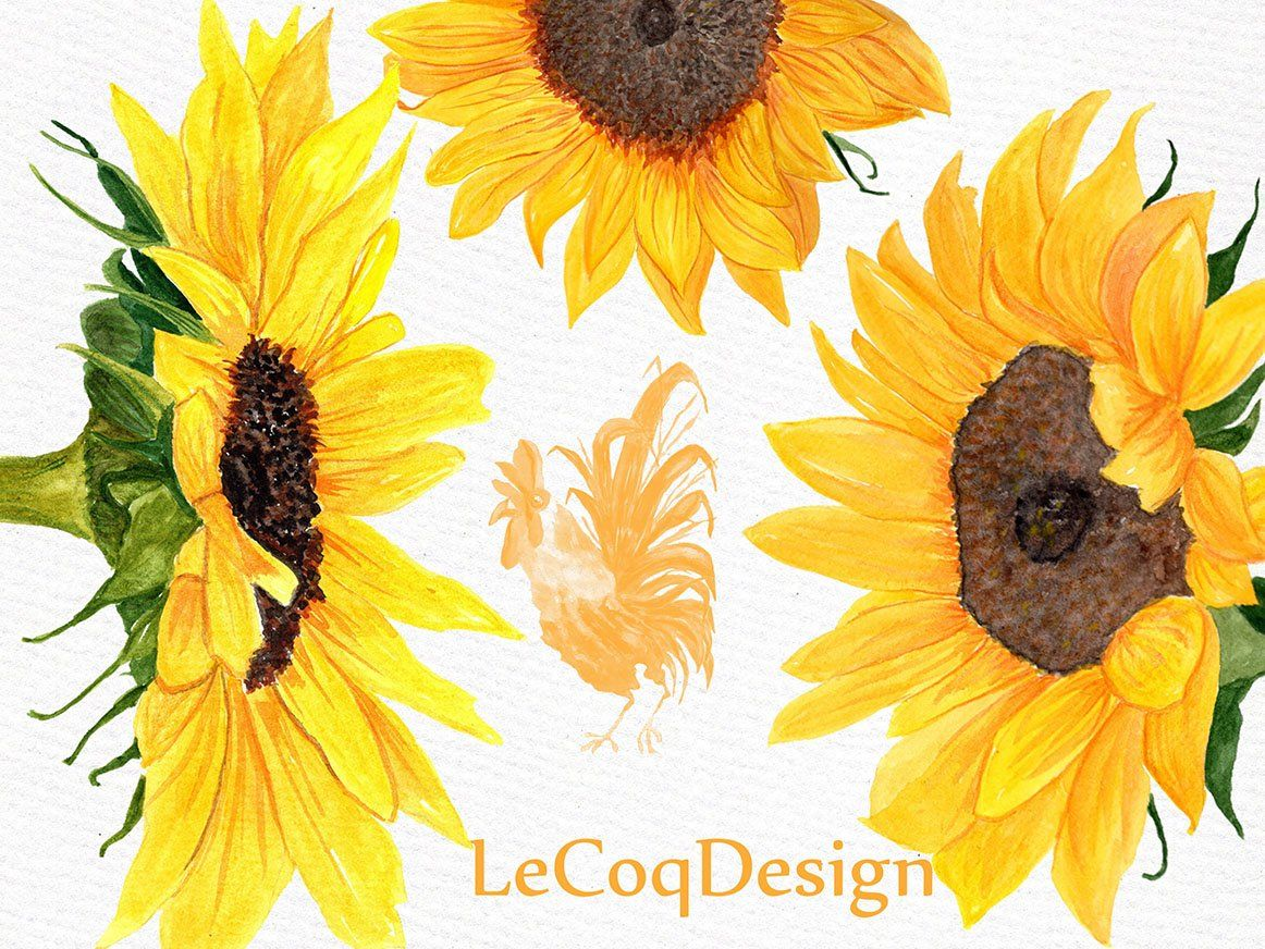 Sunflower Watercolor Clipart Watercolor Sunflower Watercolor