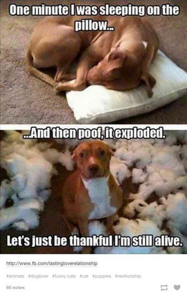 50 Hilarious And Relatable Dog Memes For National Dog Day Cute Funny Animals Funny Animals Funny Animal Jokes