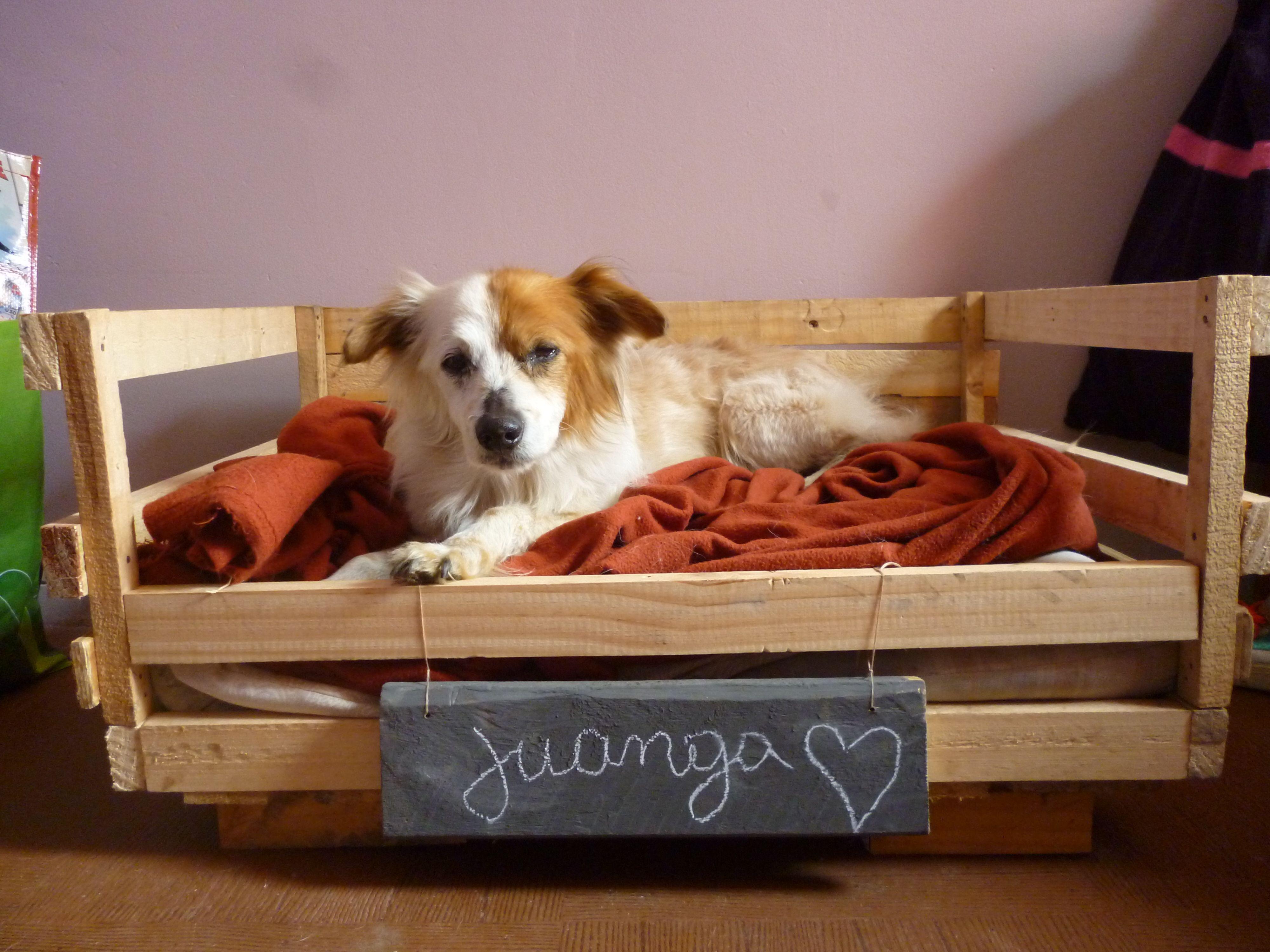 pallet perro cama de perro Cosas utiles Pinterest
