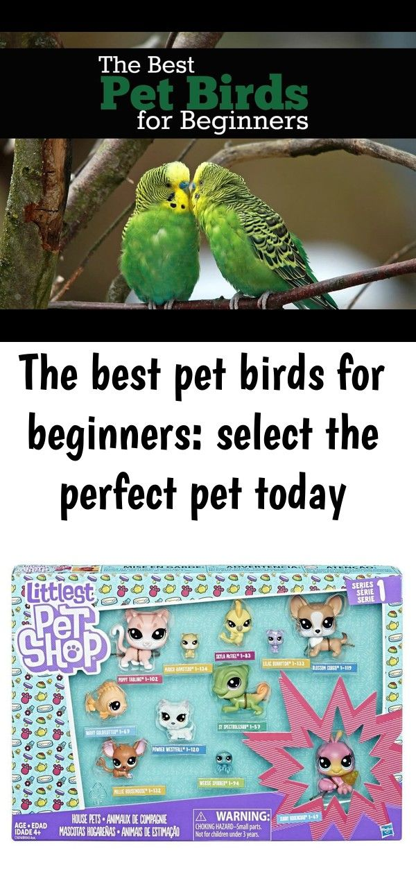 The best pet birds for beginners select the perfect pet