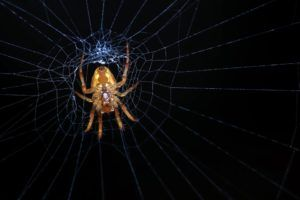 Dream about spider meaning according to Islam | Dream