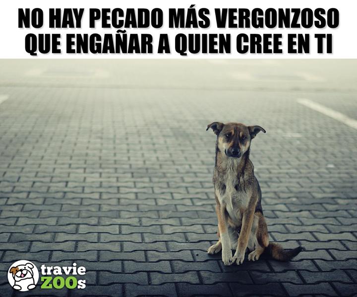 Como Puede Haber Gente Tan Cruel Y Despiadada Perro Abandono Maltrato Verguenza Dogs Perros Perros Frases Amor De Perro