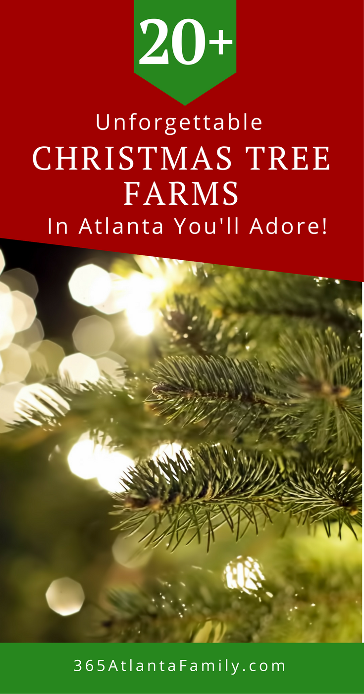 20 Unforgettable Christmas Tree Farms In Atlanta You Ll Adore 2020 Christmas Tree Farm Georgia Christmas Tree Farms