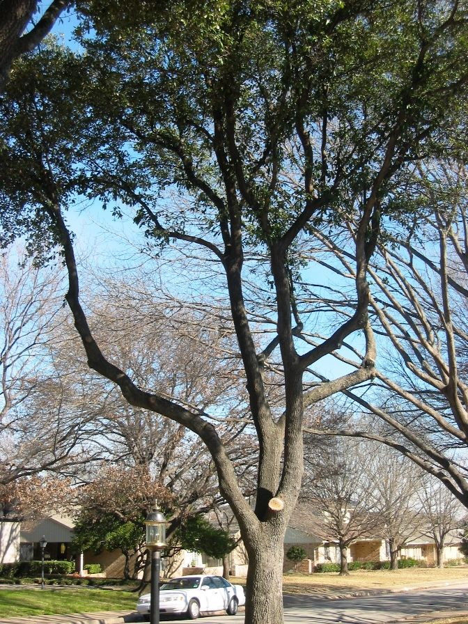 Florida Shade Garden Landscaping Ideas