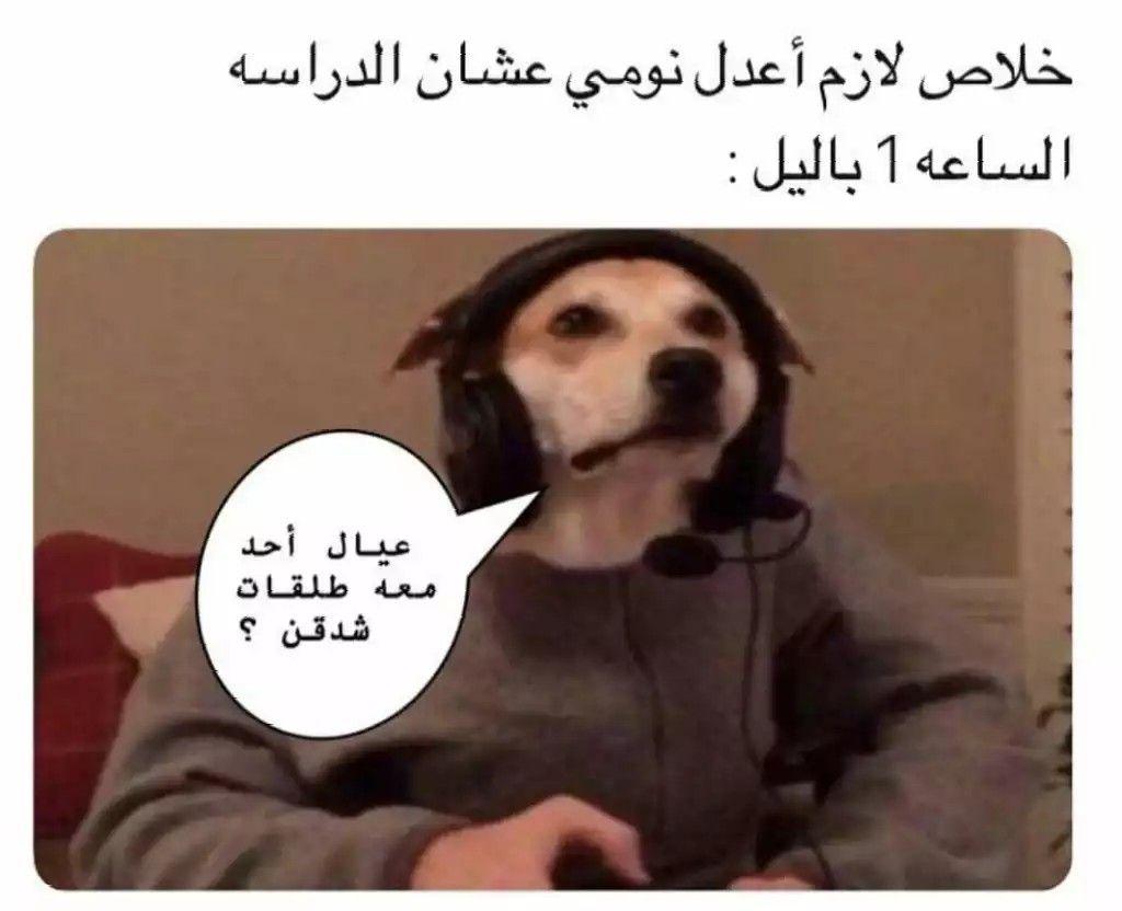 Pin By ѕa Oo On للضحك Dogs Animals