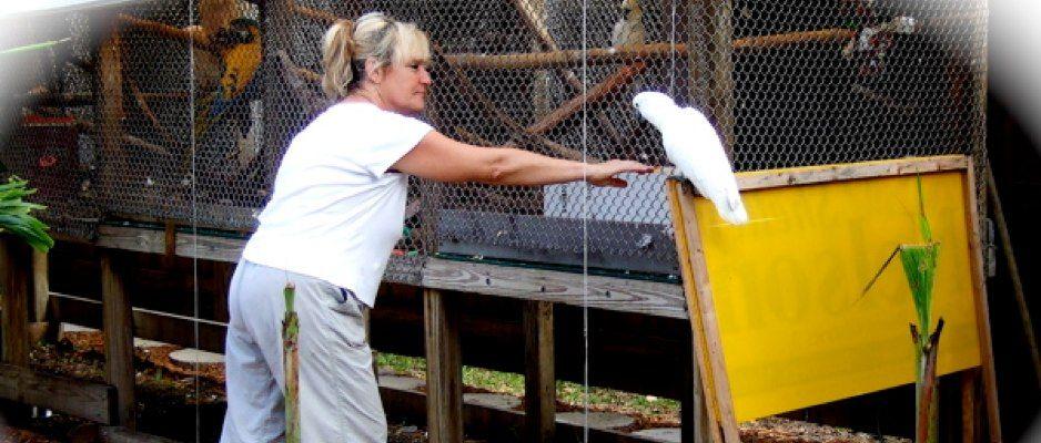 Florida Parrot Rescue Parrot Care Sanctuary M A R S Parrot Rescue Florida Parrot