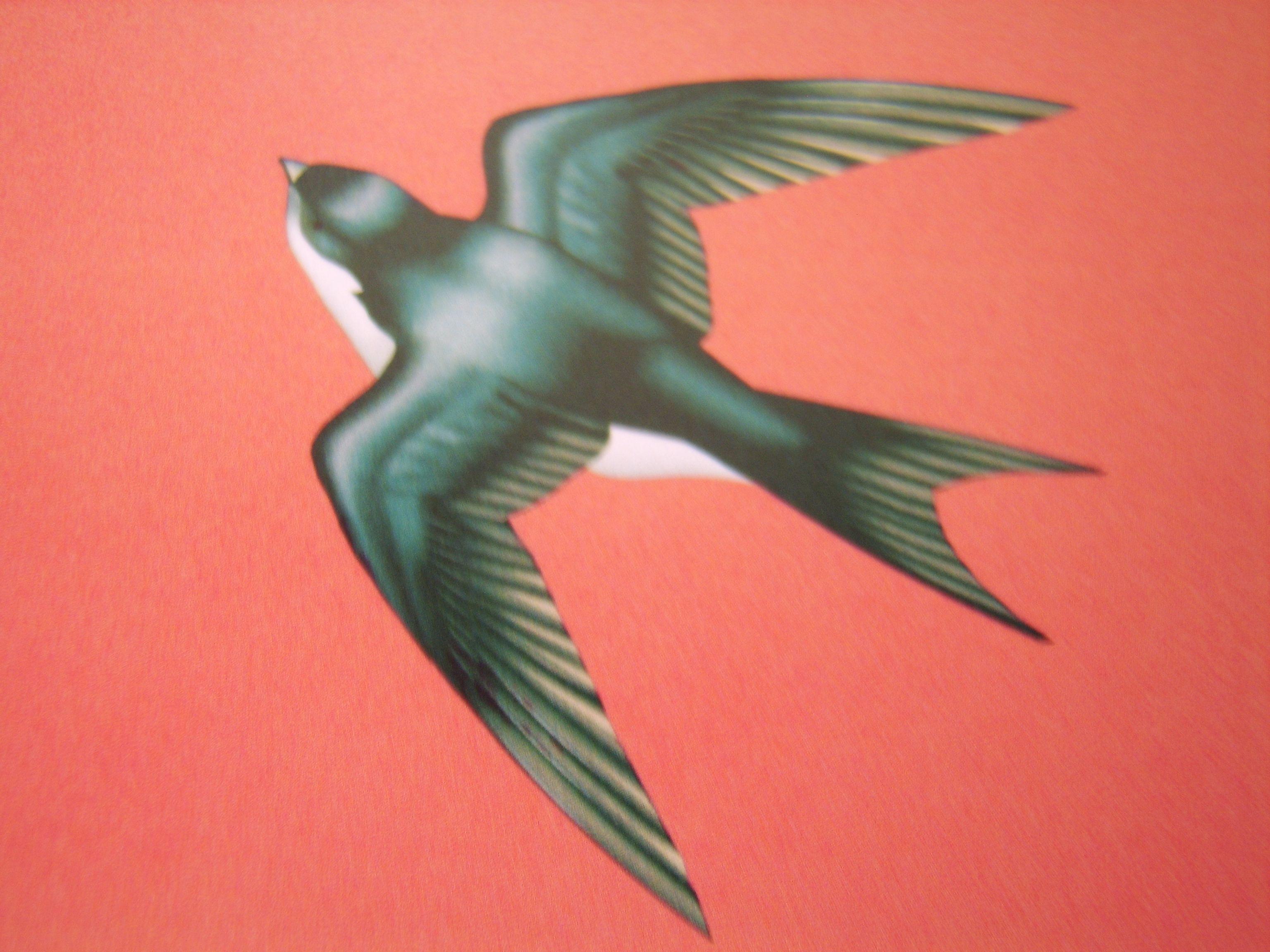Miso bird