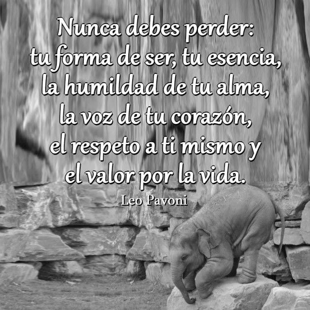 Nunca debes perder tu forma de ser, tu esencia, la humildad de tu ...