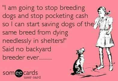Pin By Ashley On Quotes Veterinary Humor Sick Puppies Dog