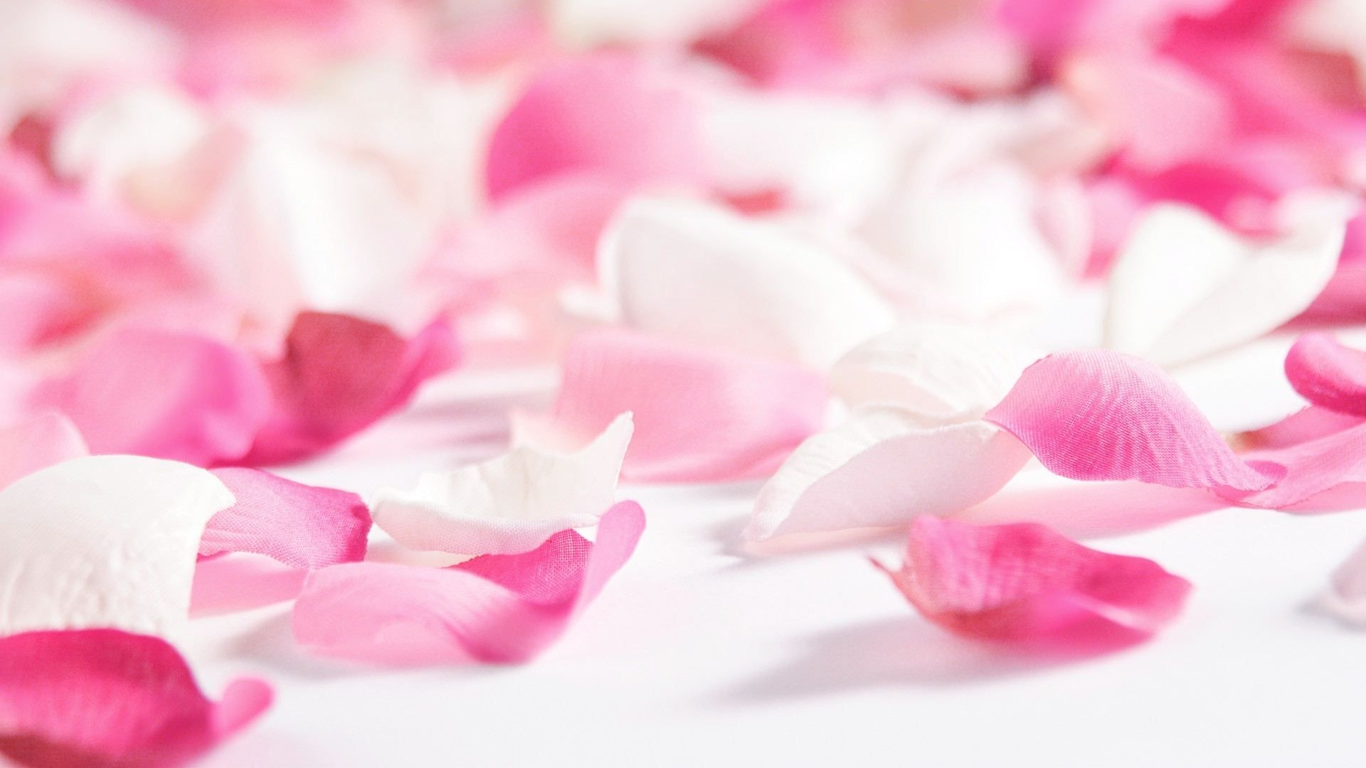 Beautiful Pink Flower Wallpaper Wallpaper Free Download 1024576