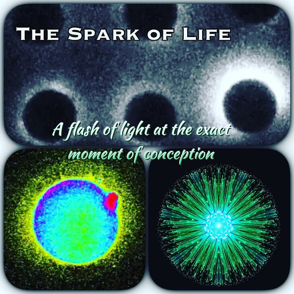 Image result for Explosion of sperm and egg