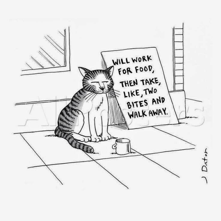 Homeless Street Cat Begging Cartoon