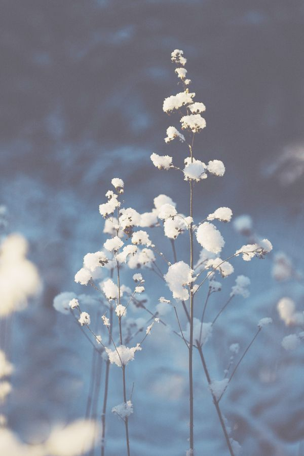 Photography / White & light - Winter Photography by Nina Lindfors