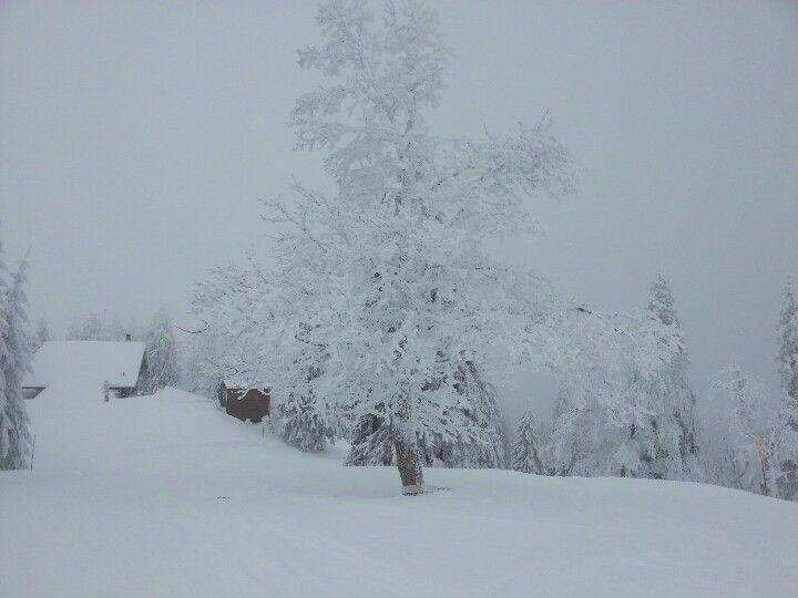 Savagnier (Jura,Switzerland 07.02.2013)