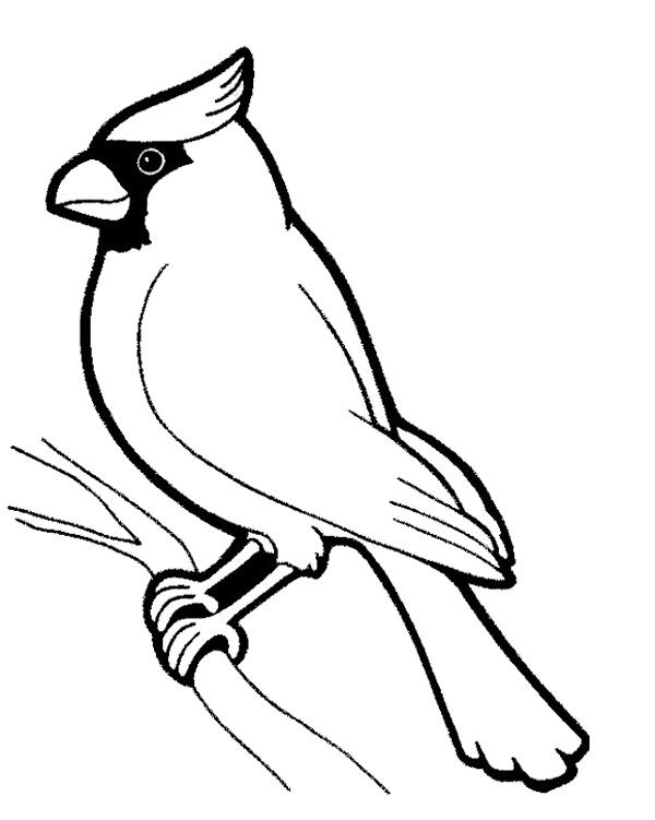 Beautiful And Fascinating Birds Coloring Page