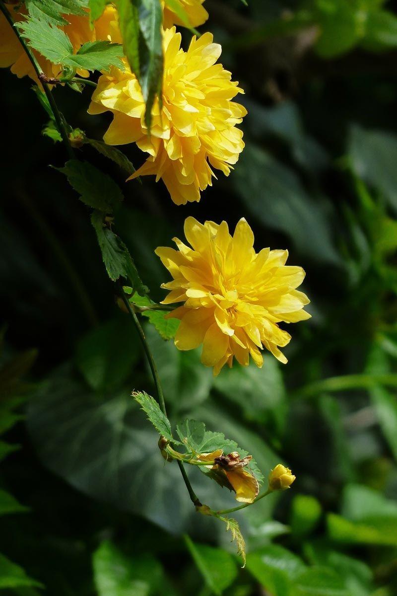 Pflanzen Fur Trockene Und Sonnige Standorte Pflegeleichte Pflanzen Pflanzen Garten Pflanzen