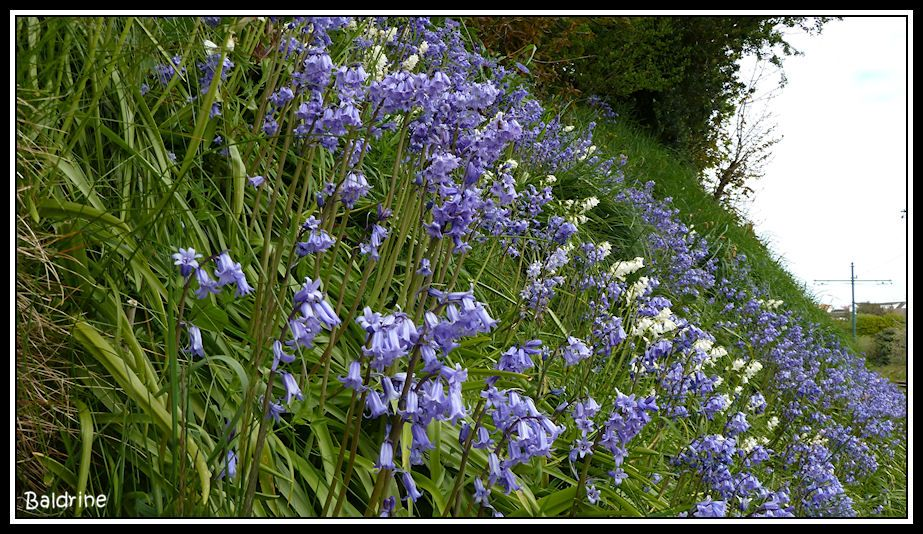 Bluebells Beautiful places, Nature, Bluebells