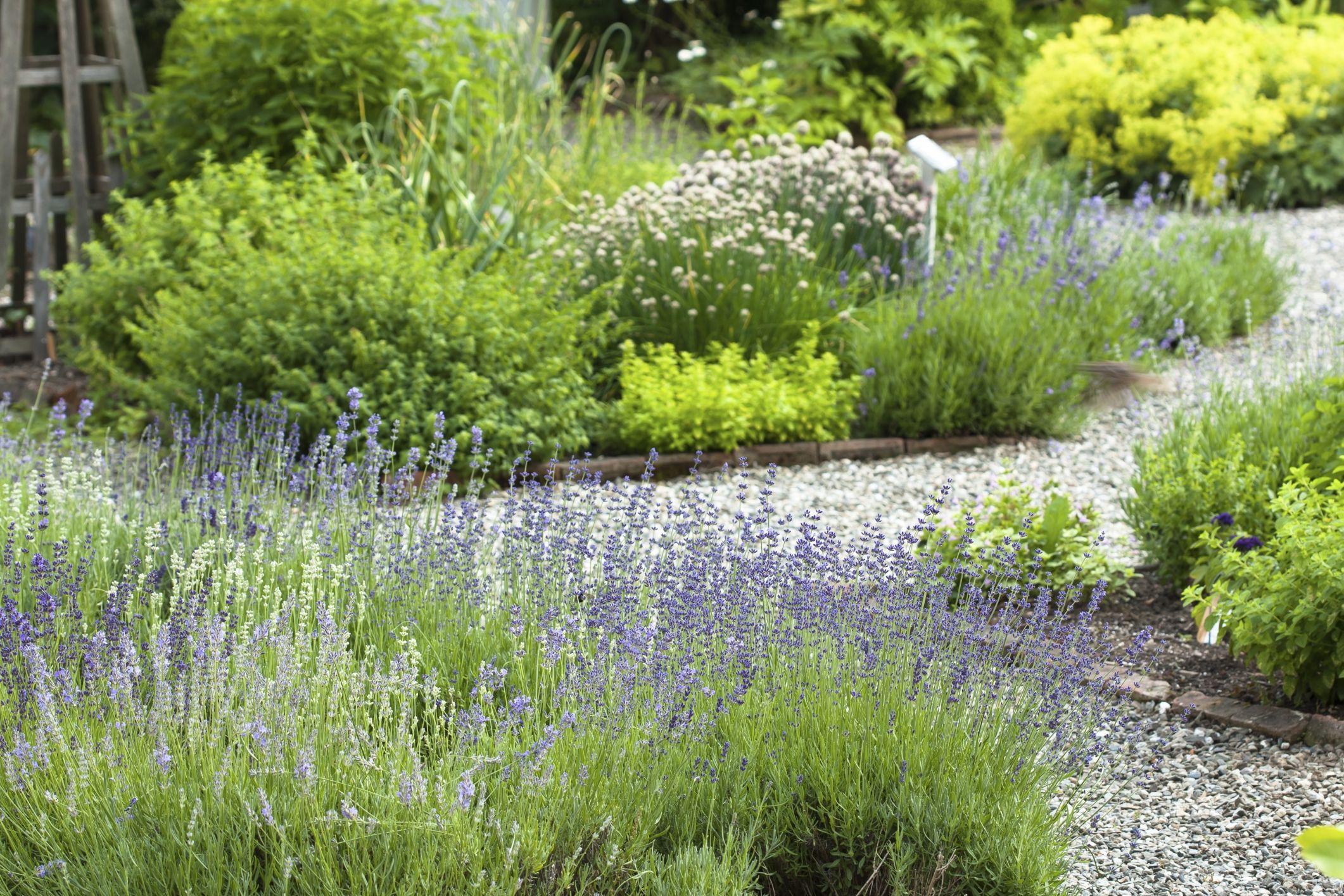 pingl par emilie sur jardin pinterest gravier lavande et all e. Black Bedroom Furniture Sets. Home Design Ideas